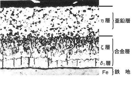皮膜の組織